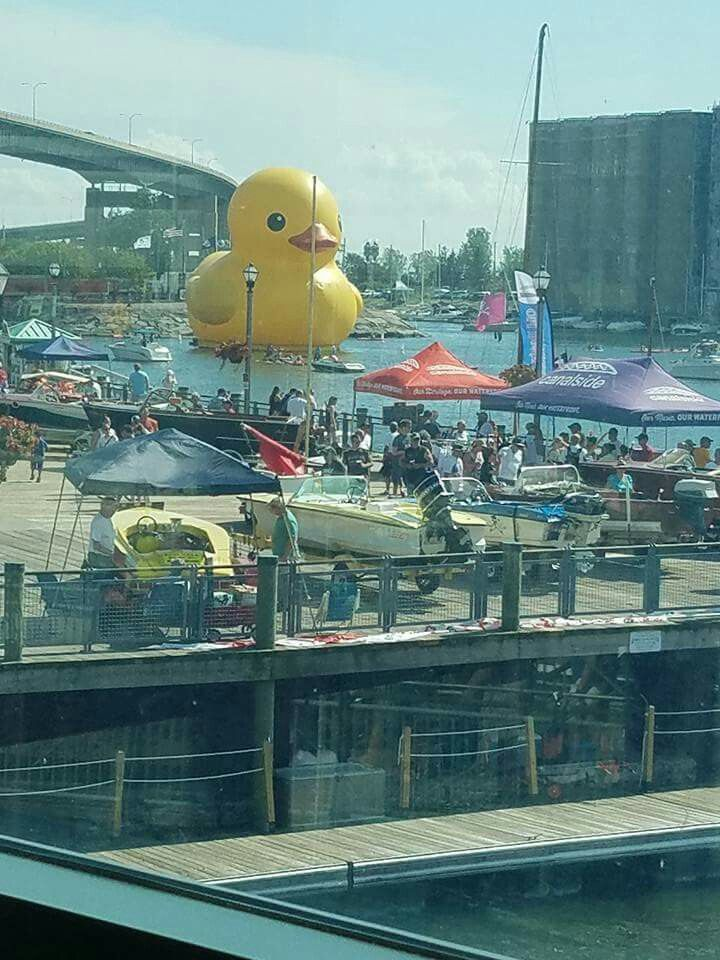 Canalside Buffalo NY That was one giant duck. Took the kids out in the boat to see it. Just an excuse to go down to Canalside which is always fun.
