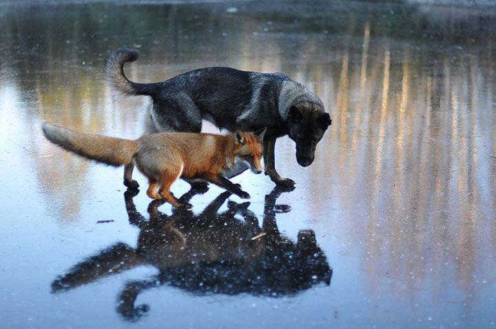 15 amitiés improbables entre animaux de différentes espèces qui vont vous…