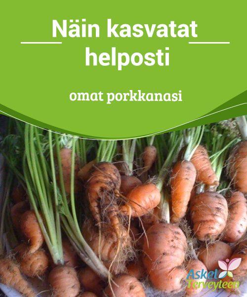 Näin kasvatat helposti omat porkkanasi   Jotta voisit #kasvattaa #porkkanoita kotonasi, sinun tarvitsee vain leikata #porkkanoiden yläosat ja laittaa ne veteen itämään.  #Terveellisetelämäntavat