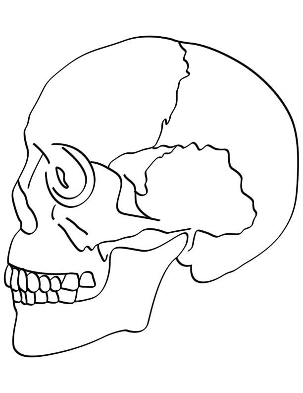 Skull bones coloring pages Download
