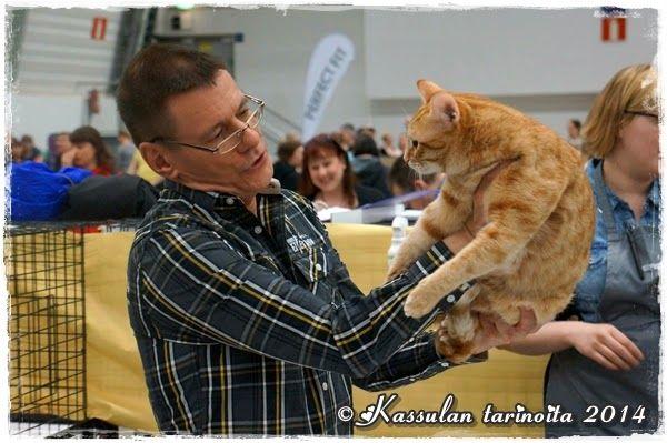 Kissanäyttelyssä 12.4.2014