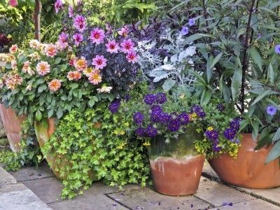 144 Best Container Plants And Gardens Images On Pinterest | Container Plants,  Gardening Tips And Garden Plants