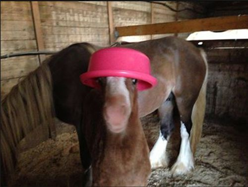 Do you like my hat?