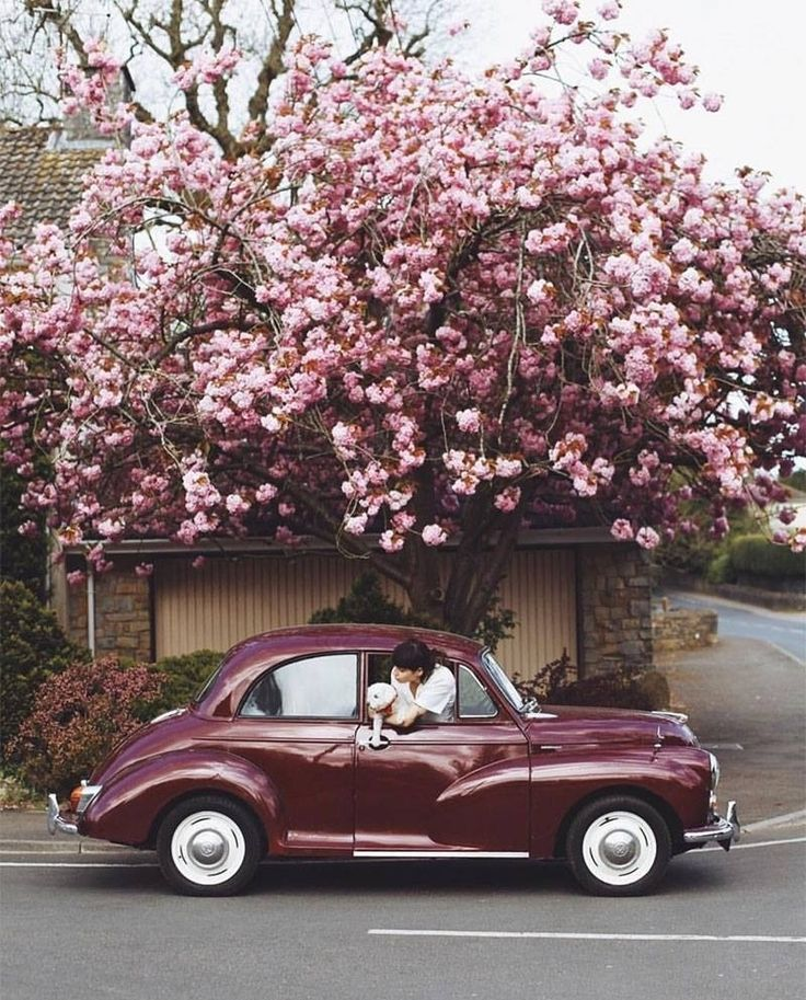 все машина с цветами картинки красивые этот