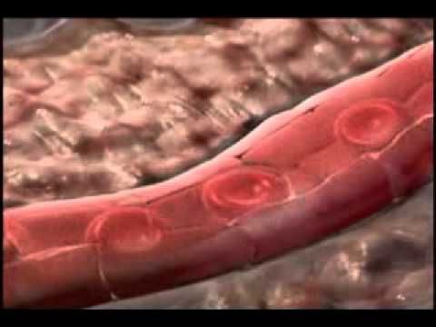 Oxygen Transport from Lungs to Cells - YouTube