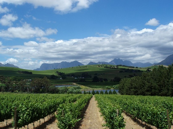 Clos Malverne - Located near Stellenbosch in the breathtaking Devon Valley, Clos Malverne is a wineland wedding venue ideal for intimate weddings