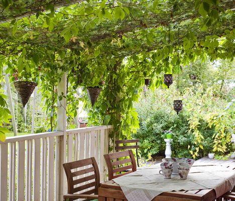 Vildvin – användbart, vackert och frodigt! | Odla.nu