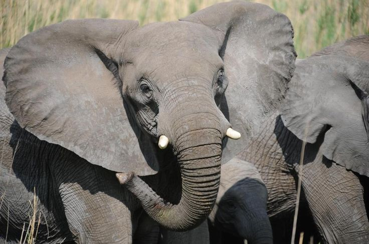 http://www.south-african-lodges.com/blog/wp-content/uploads/2016/11/entabeni-safari-conservancy-elephant.jpg