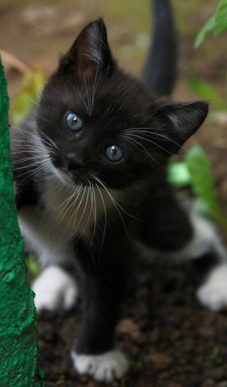 I want to get to know this kitten !!