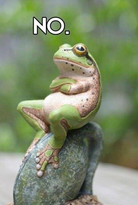 stubborn frog