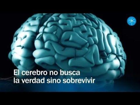 Redes 78: El cerebro no busca la verdad sino sobrevivir - neurociencias - YouTube