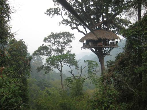 Huay Xai, Laos. Gibbon Experience http://www.travelfish.org/trip_planner/laos-three-week-holiday