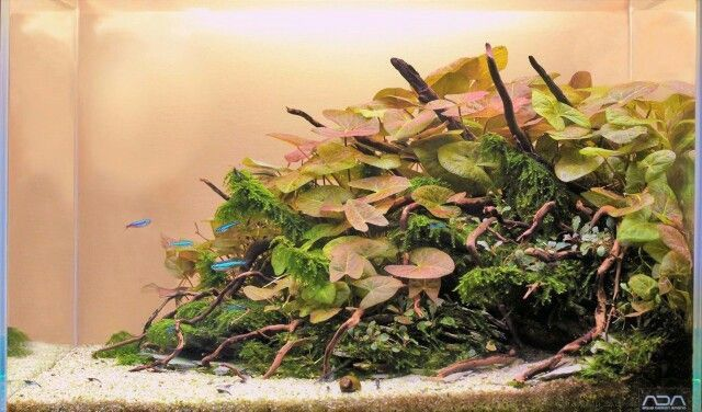 Sunrise time aquarium www.ibrio.it your aquarium born here ! il tuo acquario nasce qui ! https://www.facebook.com/ibrio.it #ibrio #acquario #acquari #acquariologia #acquariofilia #aquarium #aquariums #piante #natura #pesci #zen #design #arredamento #layout #layouts #layoutdesign #roccia #roccie  #moss #freshwater #plantedtank #aquadesignamano #tropicalfish #fishofinstagram #aquaticplants #natureaquarium #nanotank #reefkeeper #nanoreef #saltwateraquarium