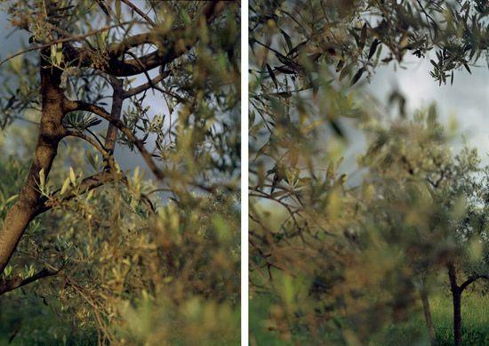 JoAnn Verburg | Waiting in Bazzano
