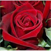 Rose Gold Item - from Leach & Garner (HK) Limited