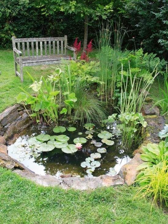 bassin de jardin  avec nénuphars et banc