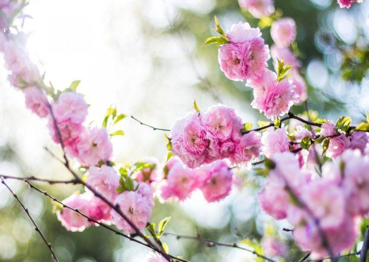 flowers pink branch spring flowering 5K HD Wallpaper