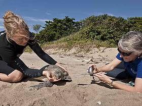 Green turtle trip - Edgecombe Bay, 14 May 2011. / ©: Jürgen Freund / WWF-Aus