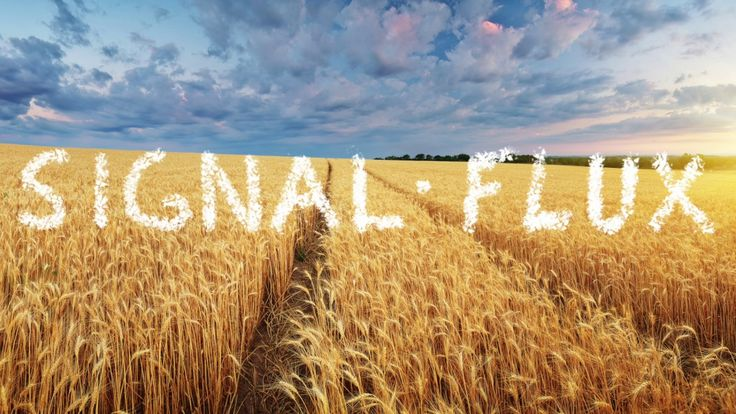 Ready for Summer with a brand new Signal Flux! Signal Flux - The road in the rye