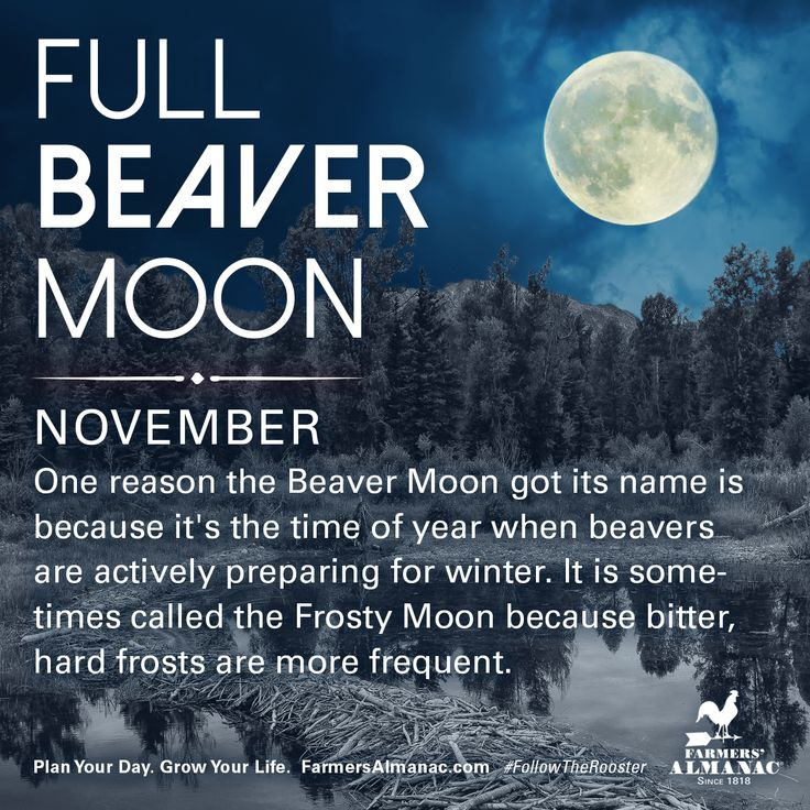 November's full Moon, like other full Moons, is rich in folklore and therefore was given many names. Watch our short video to learn the origin behind this full Moon's names: https://www.farmersalmanac.com/november-full-beaver-moon-17952 #fullmoon #folklore #legends #NativeAmerican #astronomy #stargazing