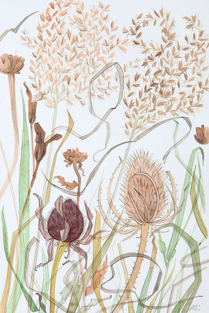 Angie Lewin 'Meadow Grasses with Teasels' watercolour http://www.angielewin.co.uk