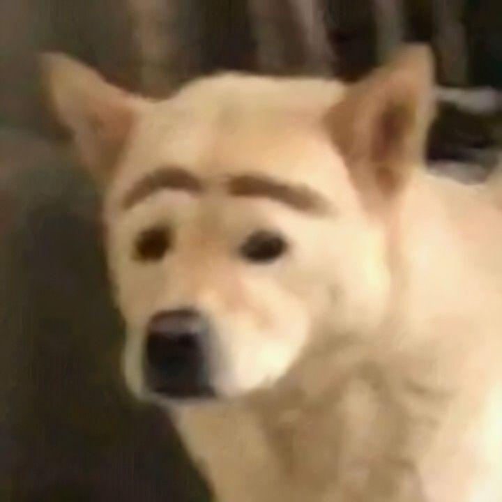 Perro Con Cejas Perros Cejas