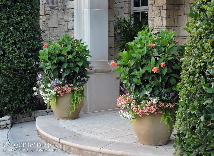 299 Best Container Gardening Unique By Design Images On