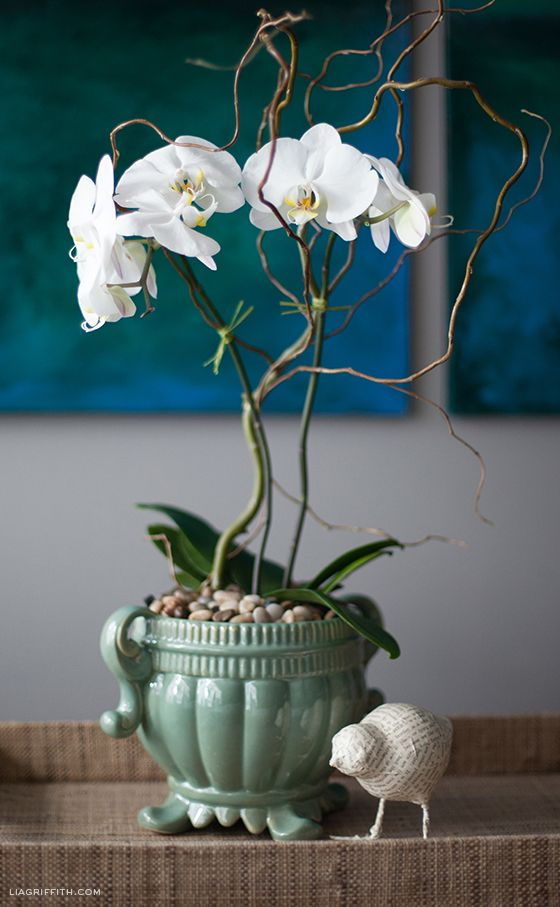 How to Style an Orchid Plant - Beautiful display of a white phalaenopsis.