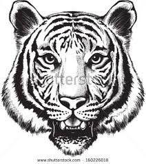 Resultado de imagen para cara de tigre dibujo