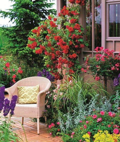 Nech už chcete zazelenať záhradný domček, nepeknú stenu alebo efektný oblúk, popínavé ruže sú tým správnym riešením. Treba si len vybrať vhodnú odrodu.
