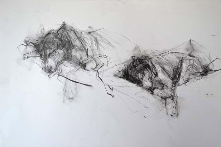 Ginny Grayson. Bat sleeping, 2011. Charcoal on paper. 50 x 70 cm
