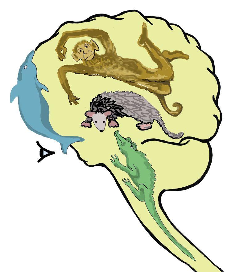 Evolutionary Psychology / Quadrune Brain / Triune Brain charts More