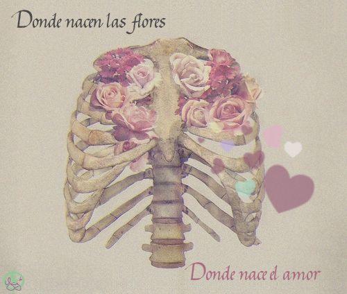 donde nacen las flores donde nace el amor-zoe