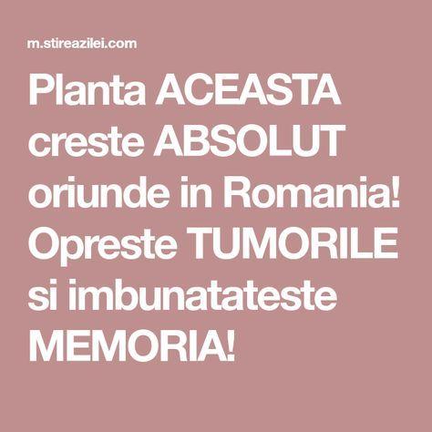 Planta ACEASTA creste ABSOLUT oriunde in Romania! Opreste TUMORILE si imbunatateste MEMORIA!