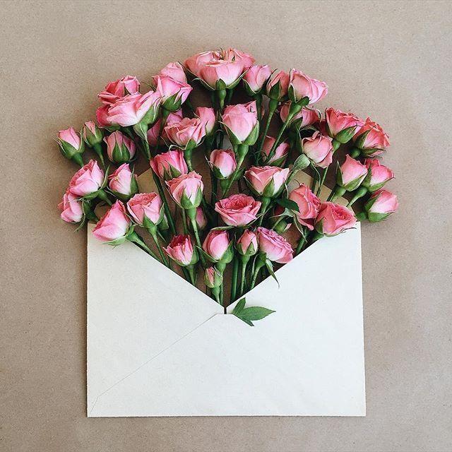 ♡❤️♫ romantic pink rose .. X ღɱɧღ ||