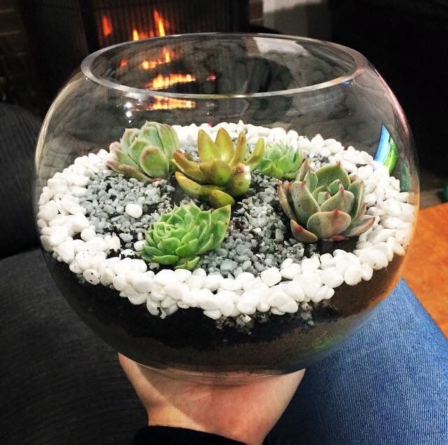 A beautiful terrarium made at a My Crafternoons Workshop!