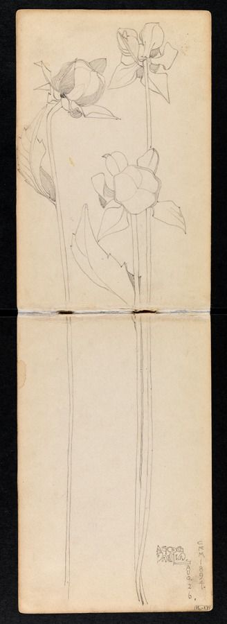 Hunterian Art Gallery Mackintosh collections: GLAHA 53012/8 Dahlia.