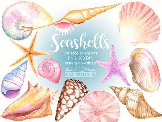 Sea Ocean Shell Png Image Sea And Ocean Sea Shells Sea