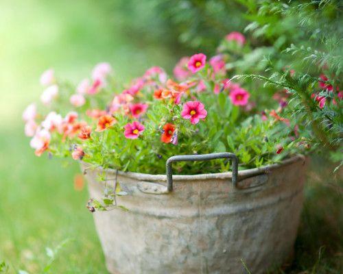 contening garden