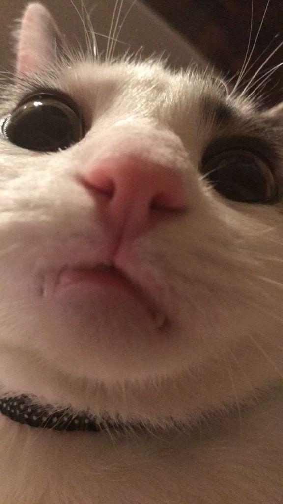 Pin By Pici On C U T E A N I M A L S In 2020 Cute Cat