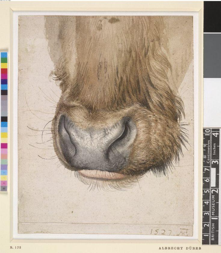 1000 images about albrecht d rer drawings on pinterest watercolour portrait and christ. Black Bedroom Furniture Sets. Home Design Ideas