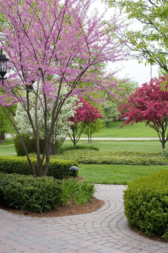 1042 best images about front landscape on pinterest for Best dwarf trees for front yard