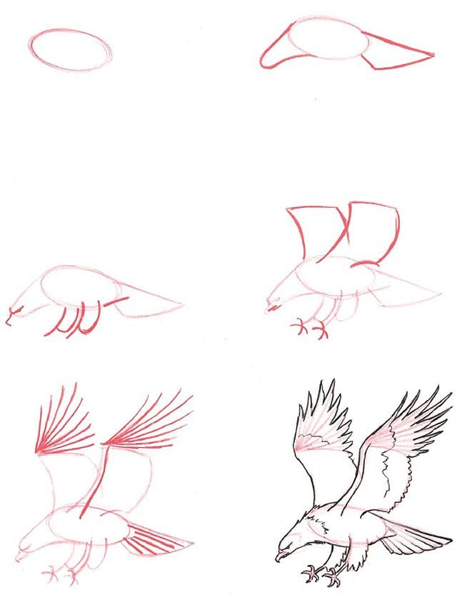 How to draw - eagle swooping in to grab something