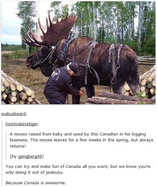 Even the moose are loyal in Canada, unlike most people in America<< Woud you like some aloe vera for that BURN?