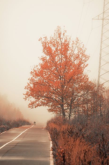 "Autumn Road From ""Autumn"" photo prints collection. #autumnroad #foggy #autumn #autumnnature #landscape #autumnphoto"