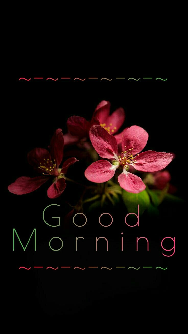 Good Morning   Day by day   Good morning greetings, Good
