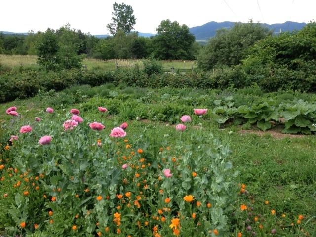 Jardin de fleur / flower garden