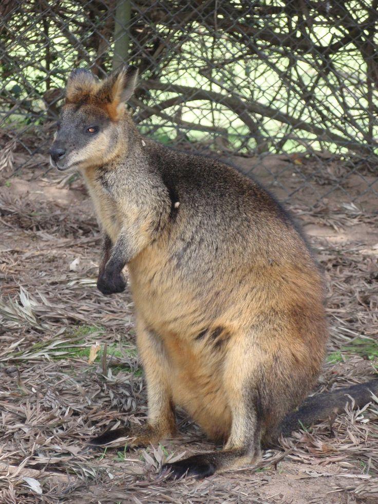 Lone Pine Koala Sanctuary, Brisbane Australia  Check out also brisbanedays.com