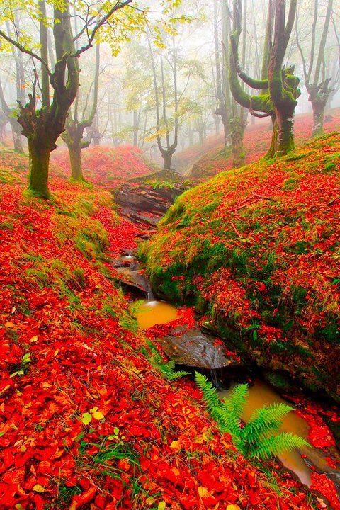 Red Forest, Cantabria, Spain. Beautiful