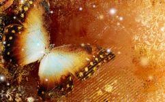 fototapet fluture orange